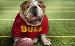 bulldog fan