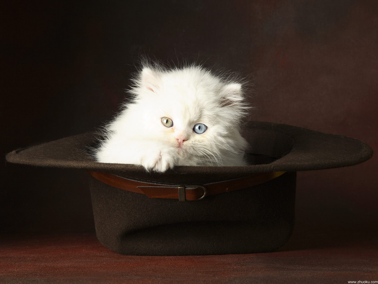 http://ru.wallfon.com/walls/animals/cat-in-the-hat-9391.jpg